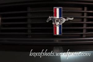 Galopujący Mustang!